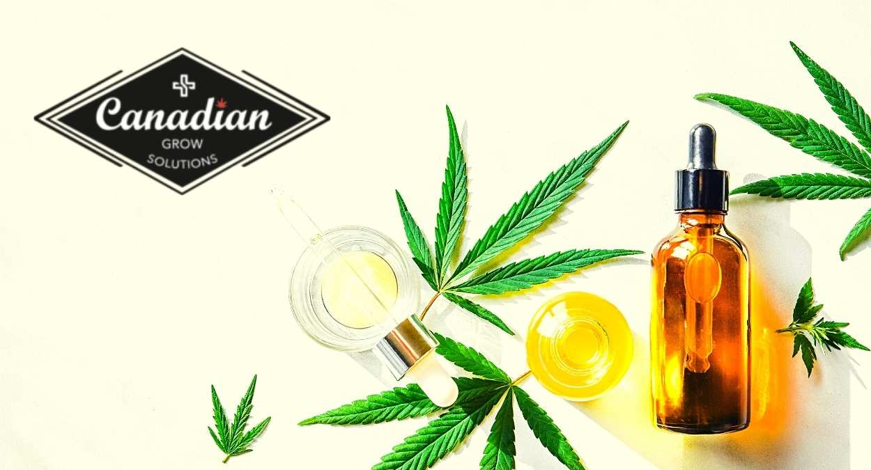 THC Free CBD Oil: Know What You're Buying