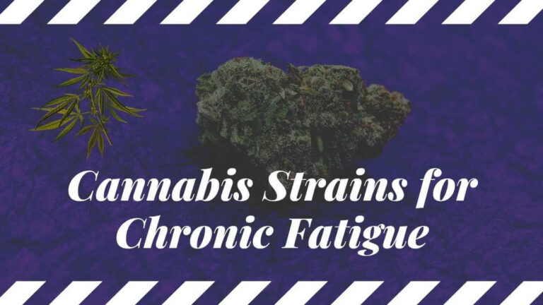 Cannabis strains for chronic Fatigue