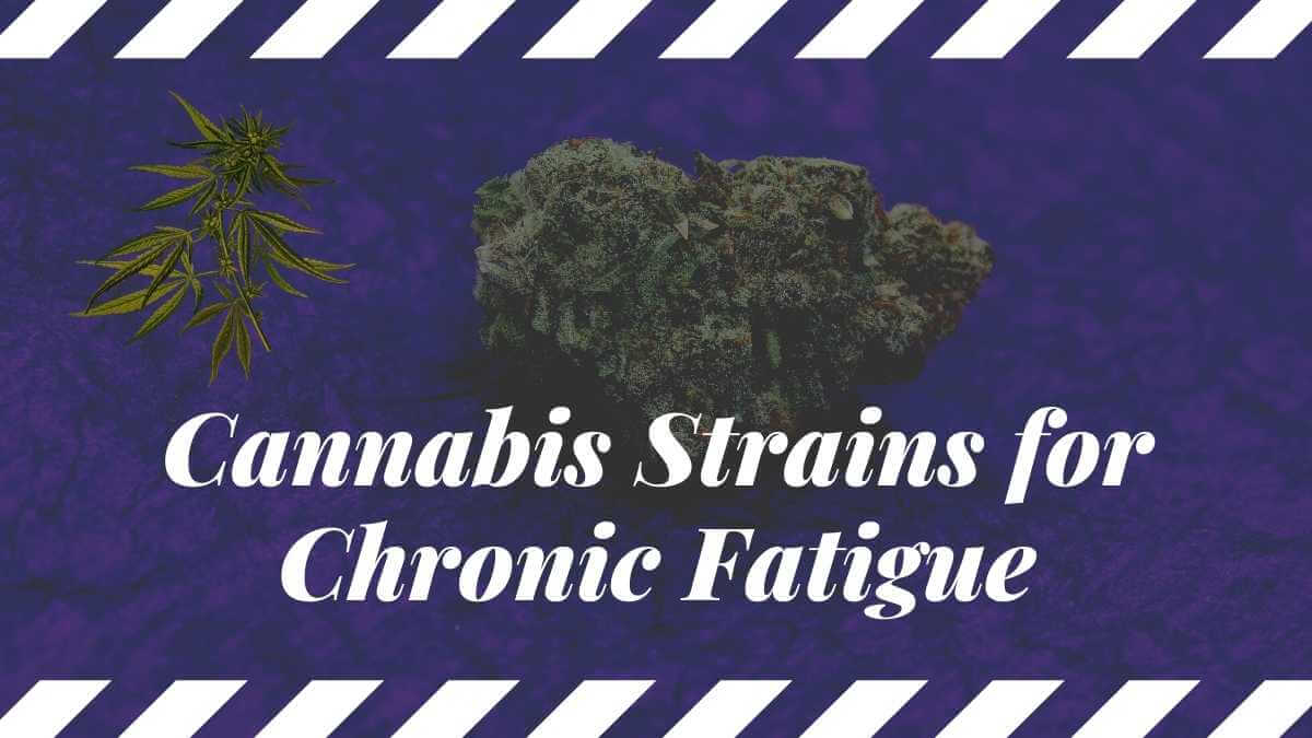 5 Most Effective Cannabis Strains For Chronic Fatigue Relief
