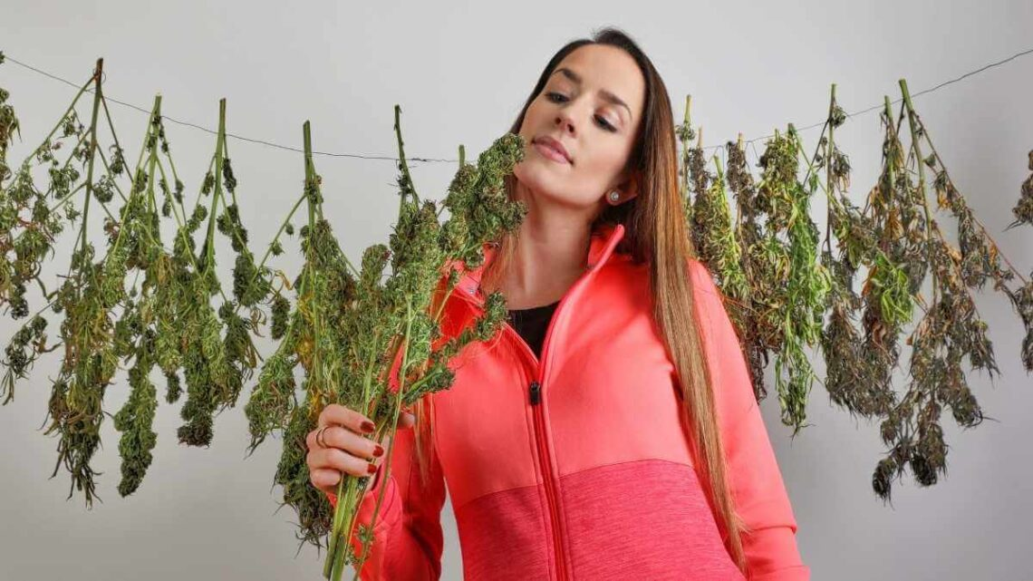 Girl on peach color top drying cannabis