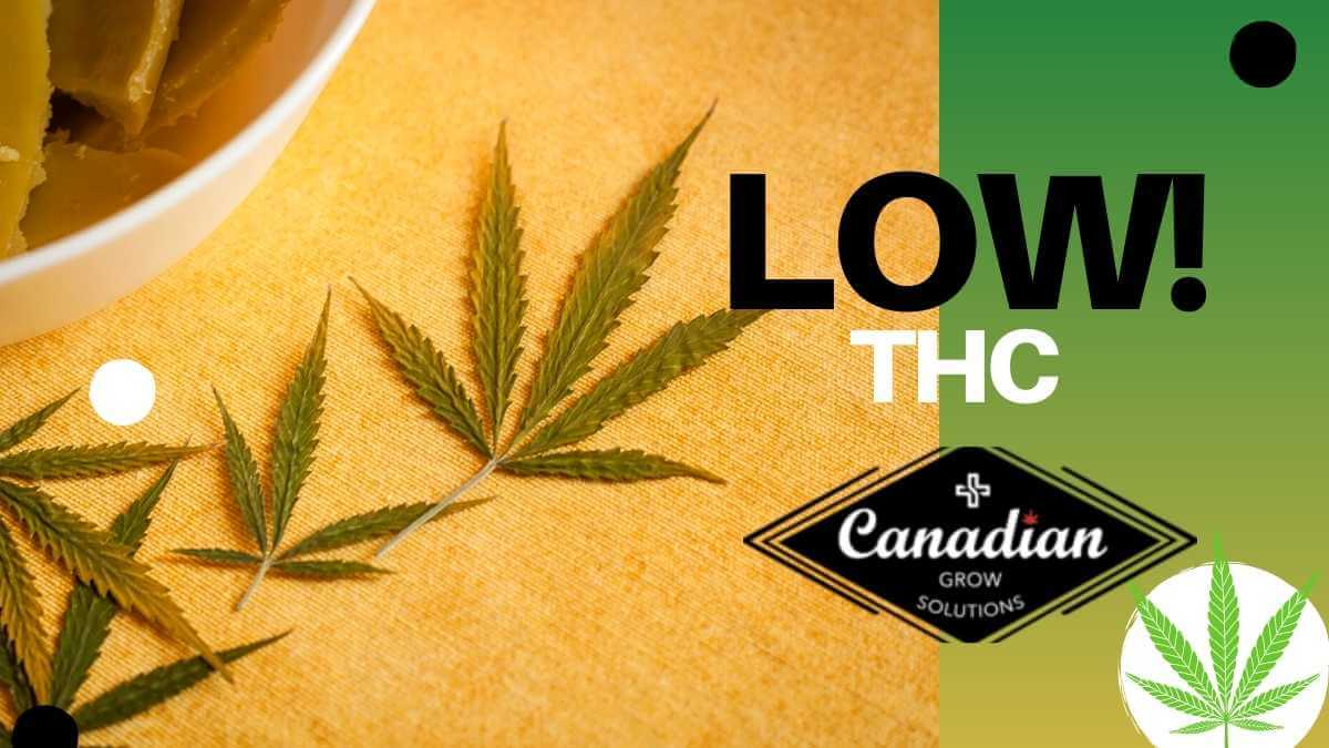Is Low THC Really The Biggest Trend in The Cannabis Industry?