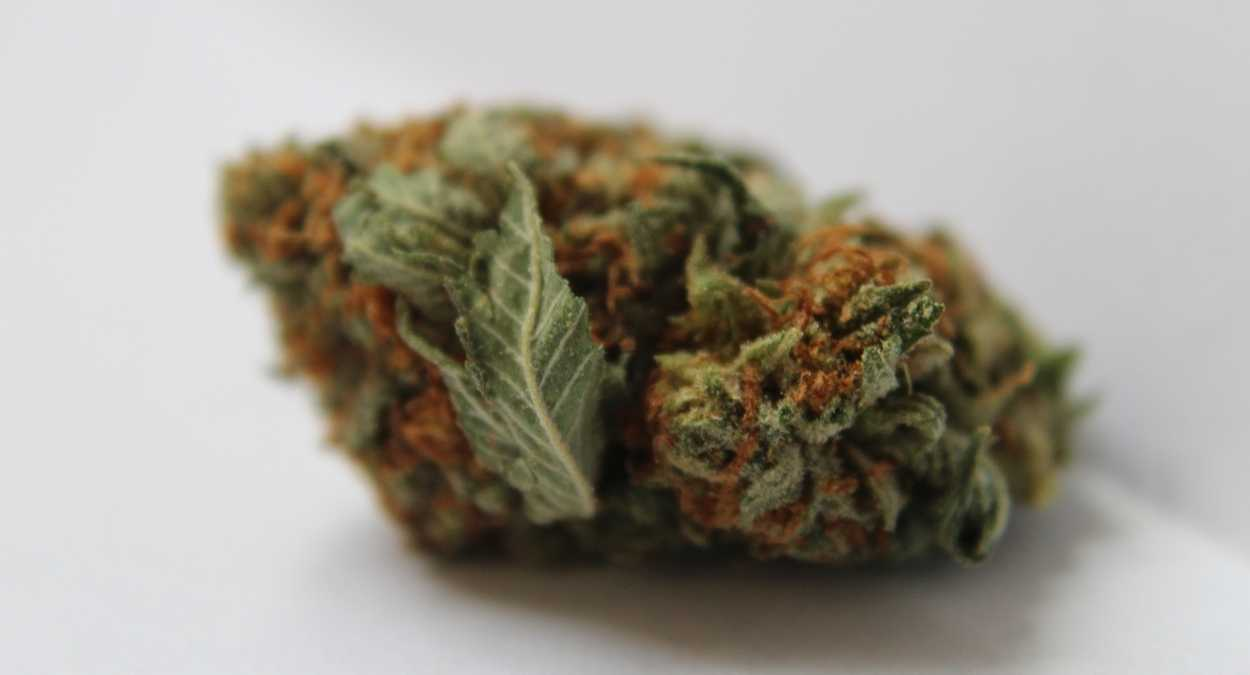 Girl Scout Cookies Information