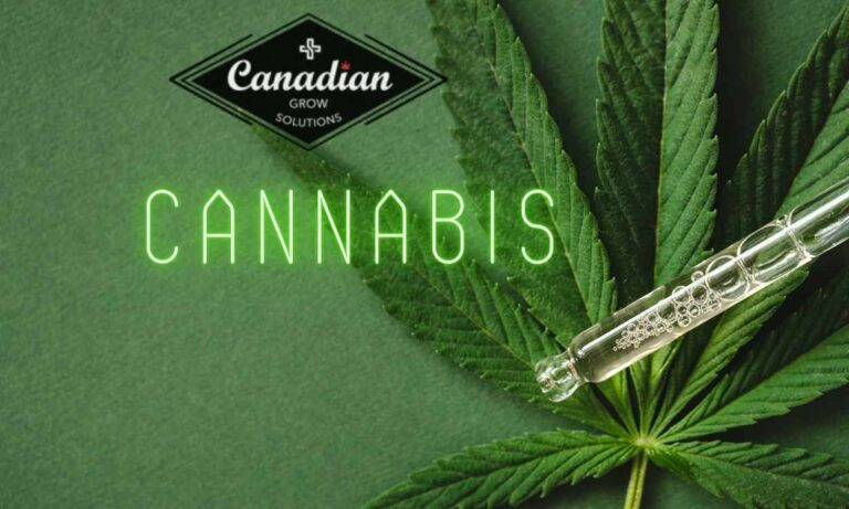 Cannabis Extraction System