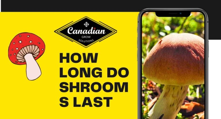 HOW LONG DO SHROOMS LAST By Canadian Grow Solutions