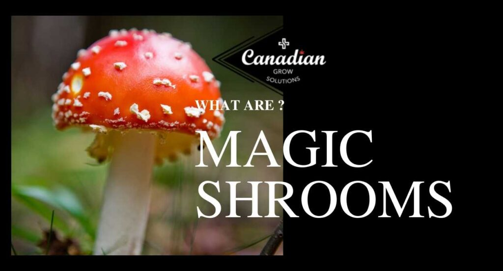 What are shrooms ?