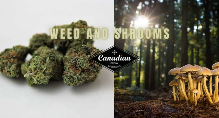 weed and shrooms